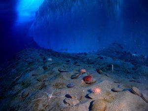 海の底にある砂や貝